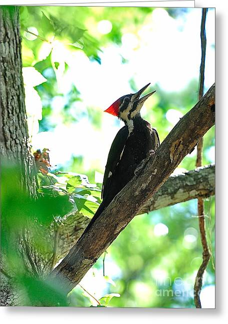 Knot Greeting Cards - Pilated Woodpecker with Firey Knot Greeting Card by Wayne Nielsen