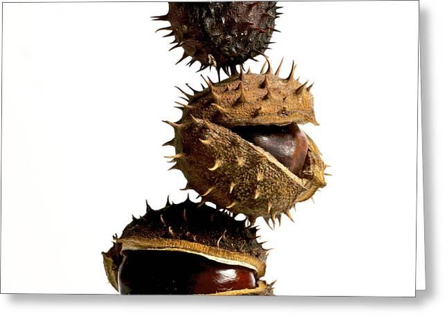 Husks Greeting Cards - Pile of chestnuts Greeting Card by Bernard Jaubert