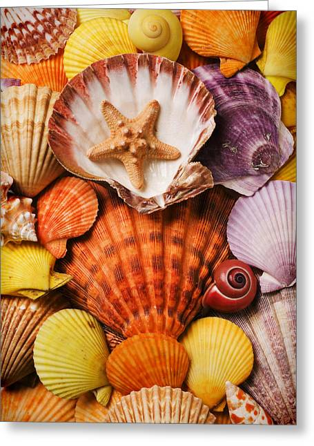 Aquatic Greeting Cards - Pile of seashells Greeting Card by Garry Gay