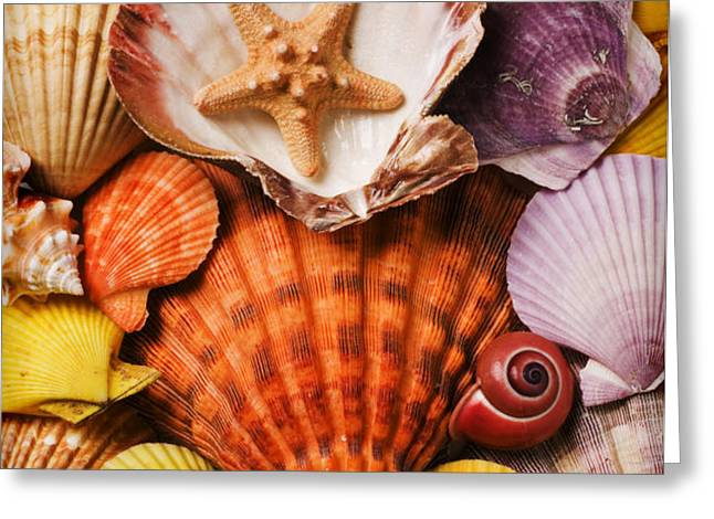 Pile of seashells Greeting Card by Garry Gay