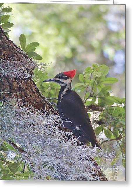 Pileated Woodpecker Greeting Cards - Pileated In The Moss Greeting Card by Deborah Benoit