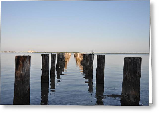 Pilings From An Old Pier Greeting Card by Bill Cannon