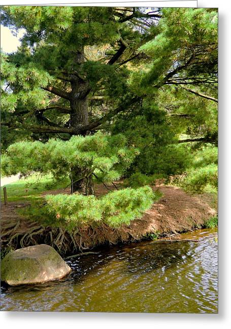 Willow Lake Greeting Cards - Pine along the Water Greeting Card by Mindy Newman