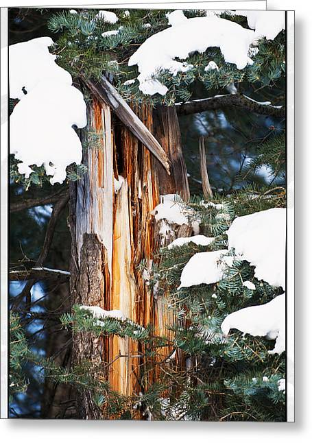 Greeting Cards - Pine Bark Greeting Card by Lisa  Spencer