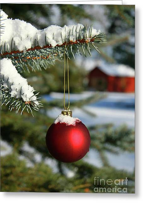 Glass Ball Greeting Cards - Pine branch and red ball Greeting Card by Sandra Cunningham