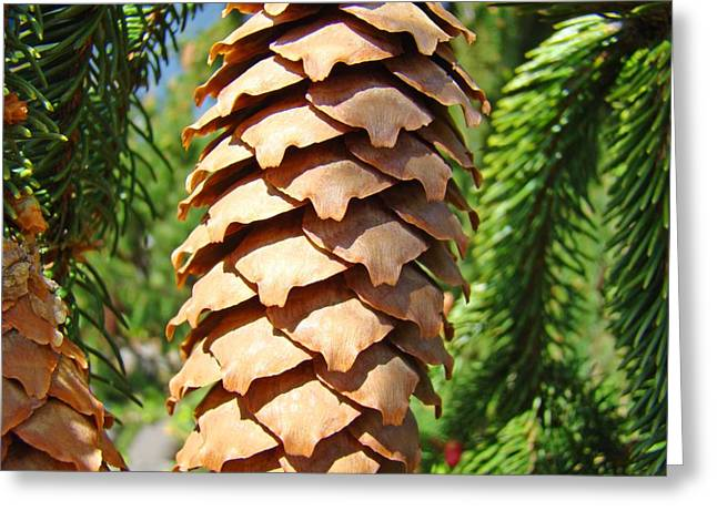 Pine Cones Greeting Cards - Pine Cone art prints Pine Tree artwork Baslee Troutman Greeting Card by Baslee Troutman Fine Art Print Collections