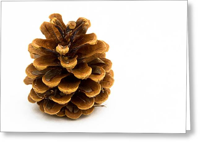 Pine Cones Greeting Cards - Pine cone Greeting Card by Jean Noren