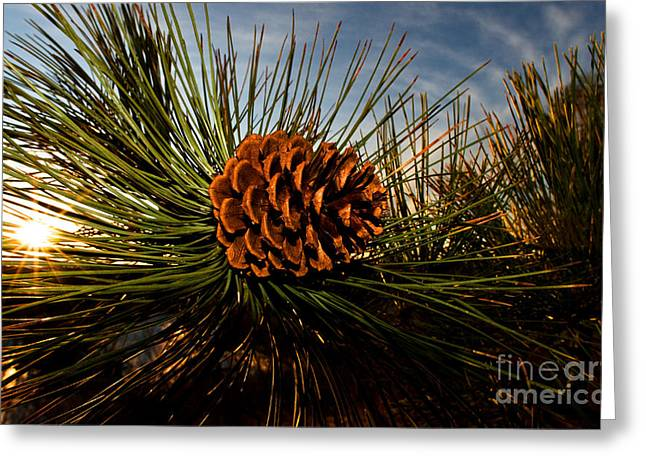 Pine Cones Greeting Cards - Pine Cone Greeting Card by Terry Elniski
