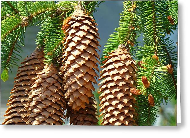 Pine Cones Greeting Cards - Pine Cones art prints Conifer Pine Tree Landscape Baslee Troutman Greeting Card by Baslee Troutman Fine Art Prints Collections