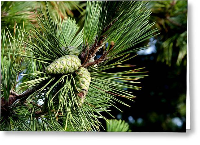 Pine Cones Digital Greeting Cards - Pine Cones in a Pine Tree Greeting Card by Bill Cannon