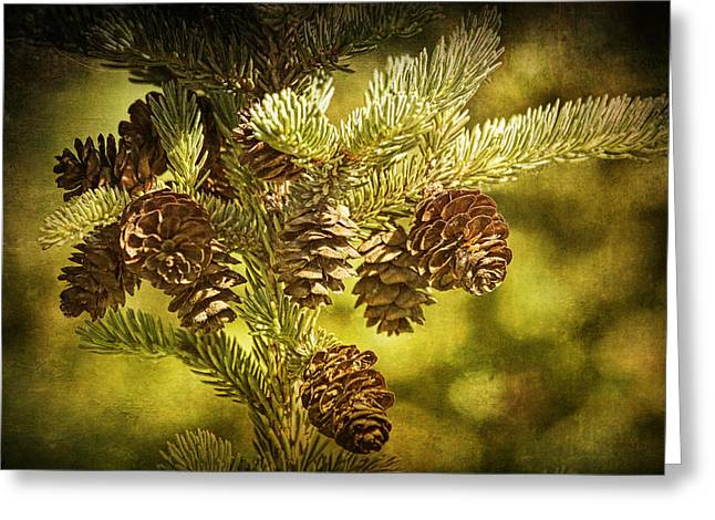 Pine Cones No.056 Greeting Card by Randall Nyhof