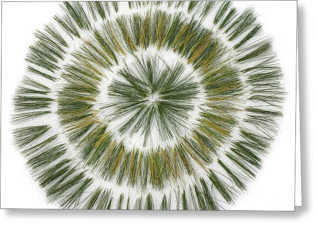 Pine needle flower Greeting Card by David Esslemont