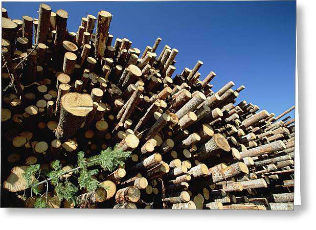 Logging Images Greeting Cards - Pine Pinus Sp Logs Drying Greeting Card by Konrad Wothe