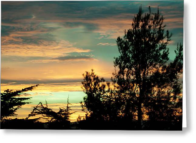Firmament Greeting Cards - Pine Silhouette On Sunset Clouds Greeting Card by Marc Garrido