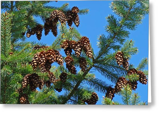 Pine Tree Art Prints Pine Cones Blue Sky Baslee Greeting Card by Baslee Troutman
