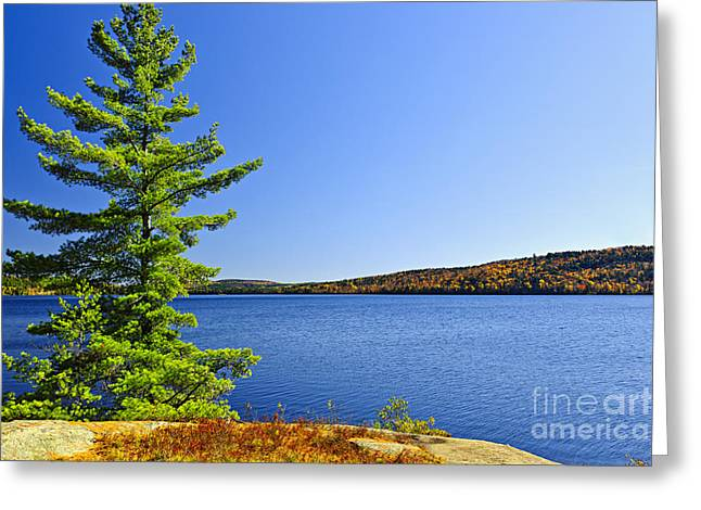 Algonquin Park Greeting Cards - Pine tree at lake shore Greeting Card by Elena Elisseeva