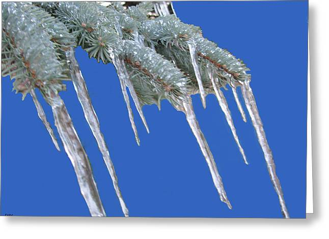 Snowy Day Greeting Cards - Pine Tree Icicle Art  Greeting Card by Debra     Vatalaro