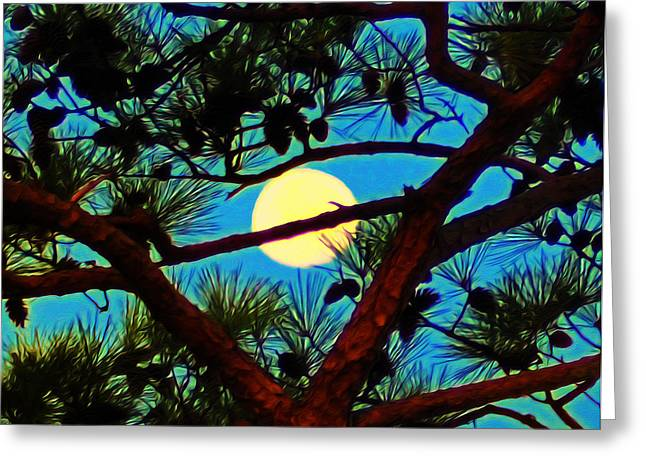 St. George Island Greeting Cards - Pine Tree Moon Greeting Card by Bill Cannon