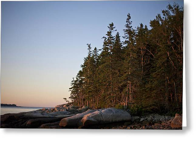Mid-coast Maine Greeting Cards - Pine Trees Along The Rocky Coastline Greeting Card by Hannele Lahti