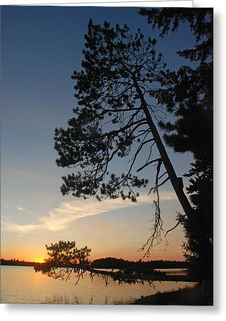 Maine Lake Greeting Cards - Pine Trees at Sunset Greeting Card by Robert Anschutz