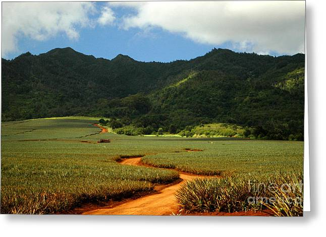 Hawai Greeting Cards - Pineapple Country Greeting Card by Mark Gilman