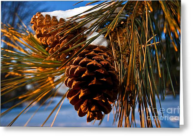 Pine Cones Greeting Cards - Pinecones In Winter Greeting Card by Terry Elniski
