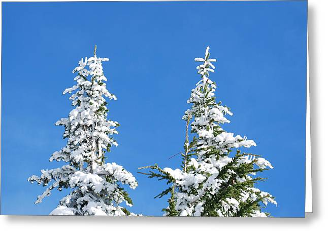Pines In Winter At Mt. Rainier Greeting Card by Twenty Two North Photography
