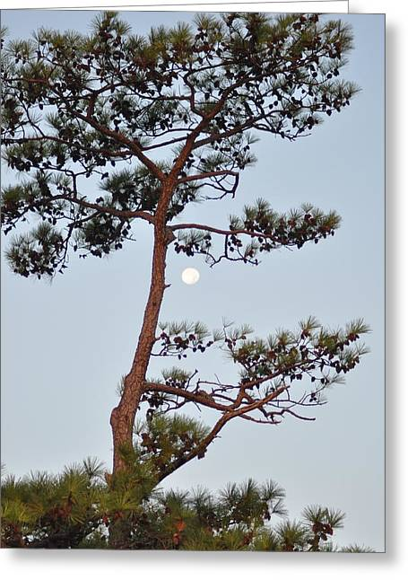 St. George Island Greeting Cards - Piney Moon Greeting Card by Bill Cannon