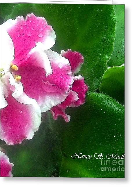African Violets Greeting Cards - Pink African Violets and Leaves Greeting Card by Nancy Mueller