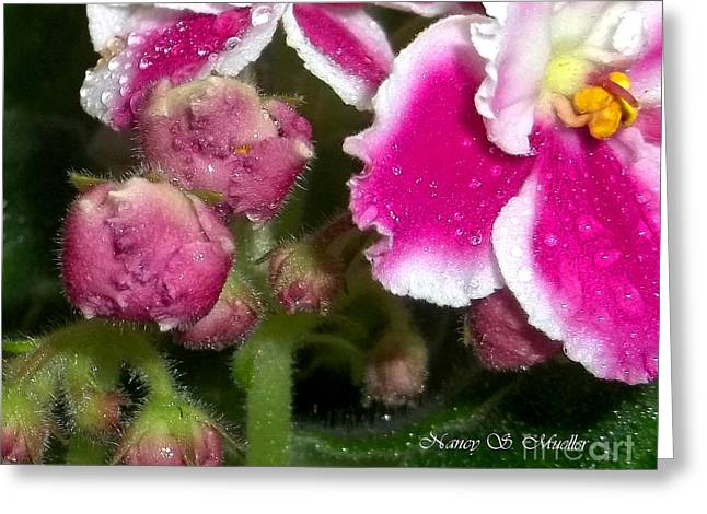 African Violets Greeting Cards - Pink African Violets Greeting Card by Nancy Mueller