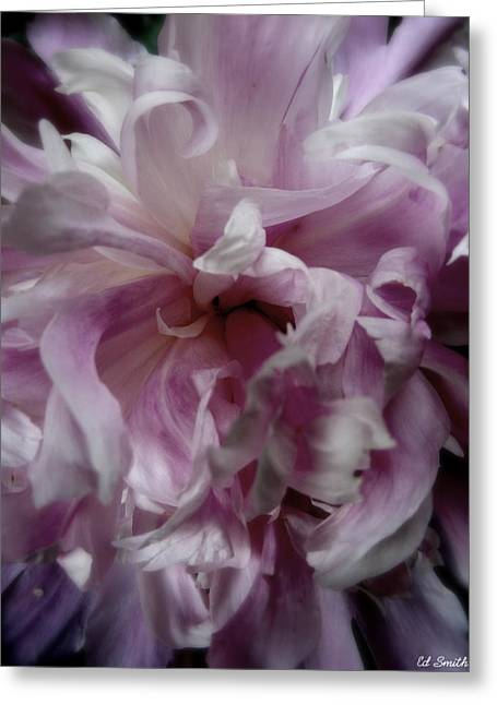 Pink And Purple Flowers Greeting Cards - Pink And Purple Greeting Card by Ed Smith