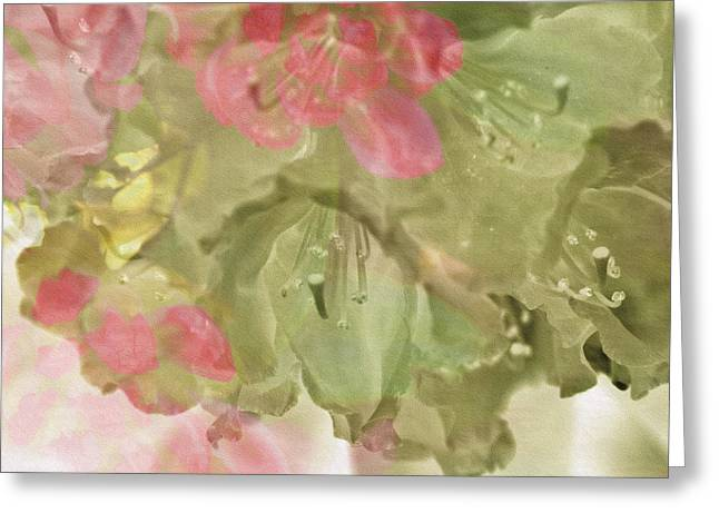 Floral Photos Mixed Media Greeting Cards - Pink and Sage Rhodie Greeting Card by Bonnie Bruno