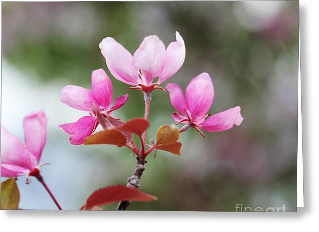 Pink Apple Blossom 2 Greeting Card by Donna Munro