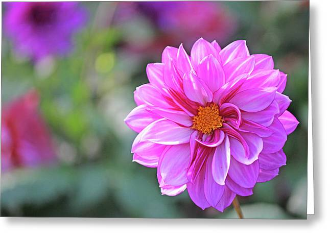 Becky Greeting Cards - Pink beauty Greeting Card by Becky Lodes