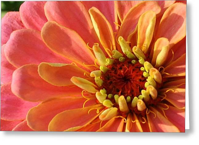 Pink Bliss Greeting Card by Bruce Bley