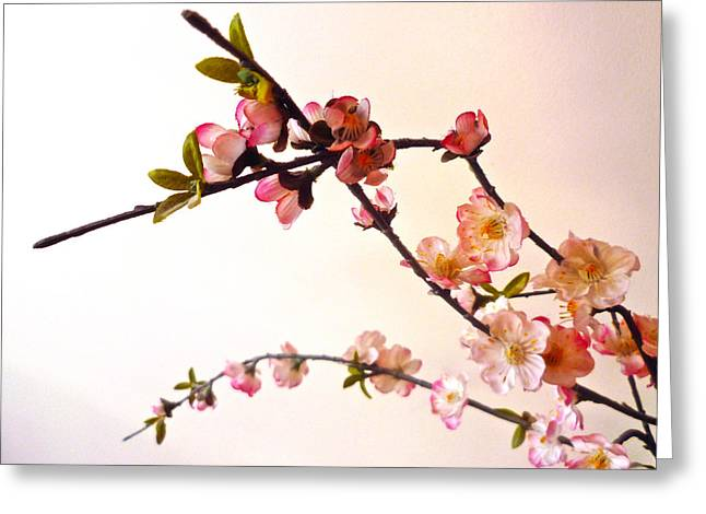 Pink Blossoms Digital Greeting Cards - Pink Blossom Greeting Card by Sharon Lisa Clarke