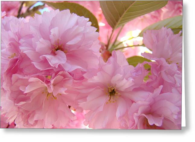 Pink Blossoms Greeting Cards - PINK BLOSSOMS Art Prints Spring Tree Blossoms Baslee Troutman Greeting Card by Baslee Troutman Art Print Collections
