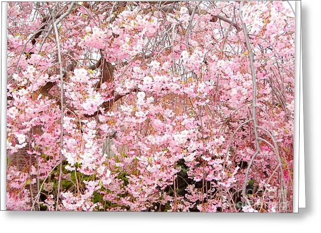 Grey And Pink Greeting Cards - Pink Blossoms Greeting Card by Carol Groenen