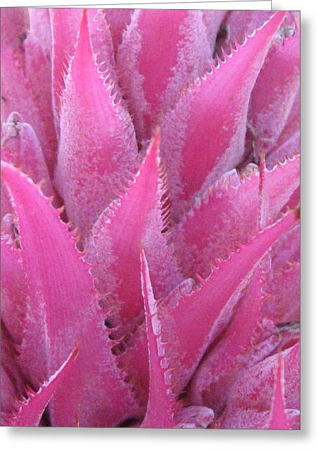 Soft Pink Greeting Cards - Pink Cactus Greeting Card by Nikki Marie Smith