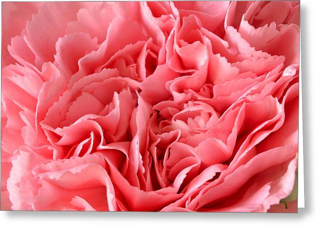 Pink Carnation Greeting Card by JD Grimes