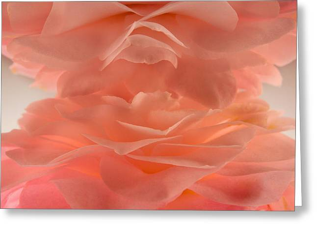 Gardenias Greeting Cards - Pink Cloud Greeting Card by Bobby Villapando