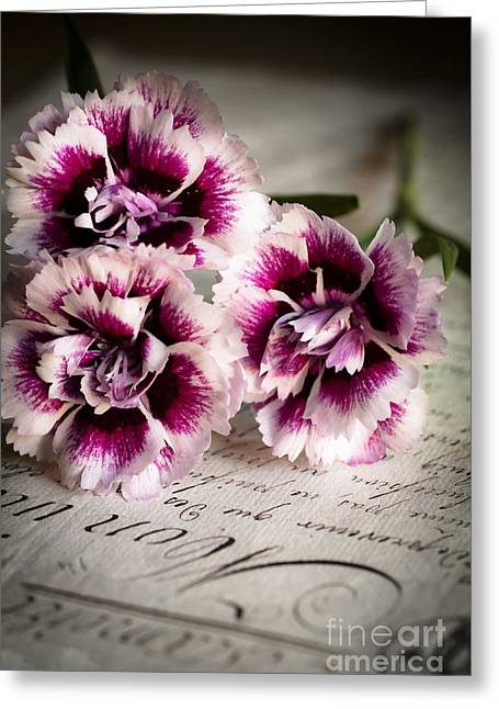 Pink Cloves Greeting Card by Jan Bickerton