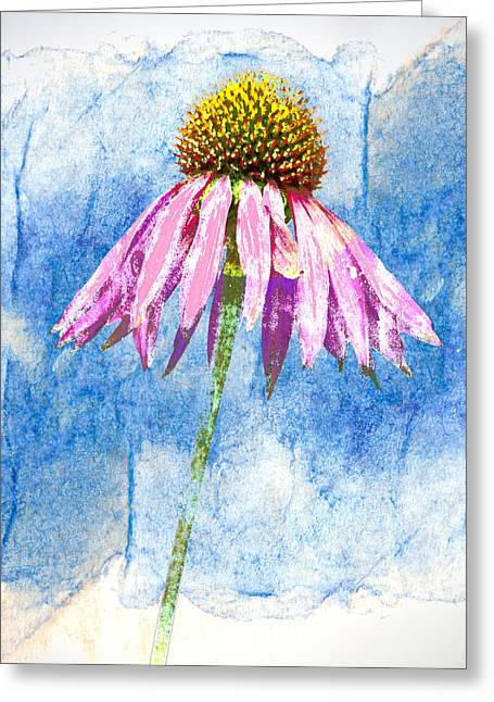 Coneflower Greeting Cards - Pink Coneflower on Blue Greeting Card by Carol Leigh