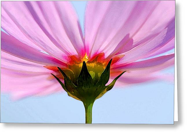 Pink Cosmos Greeting Card by Rich Franco