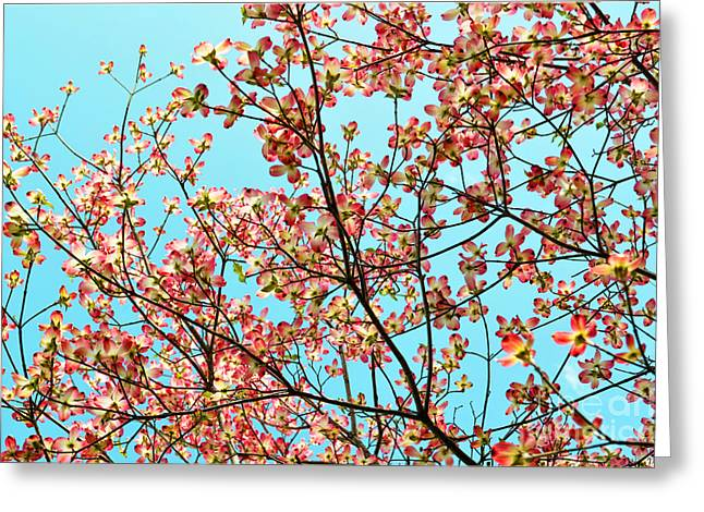 Pink Dogwood Sky Greeting Card by Debbie Portwood