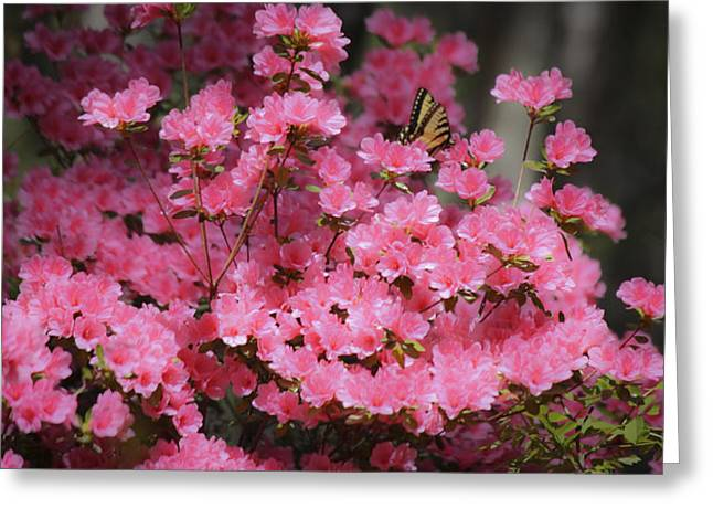 Tiger Dream Greeting Cards - Pink Dream Greeting Card by Teresa Mucha