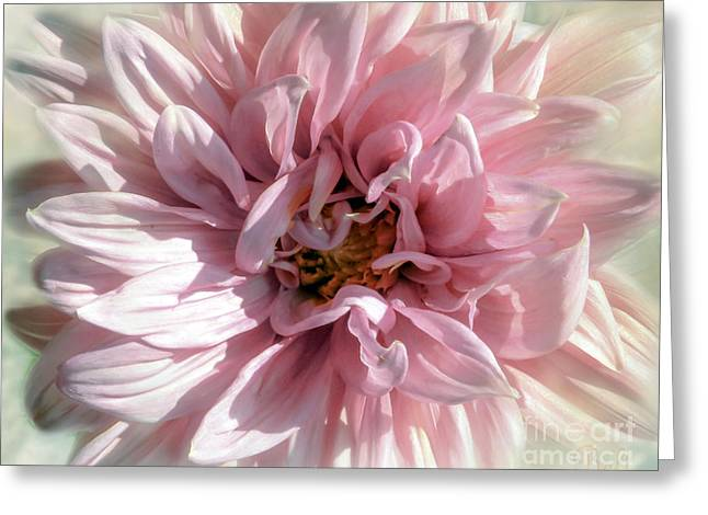 Floral Artist Greeting Cards - Pink Dreams Greeting Card by Christine Belt