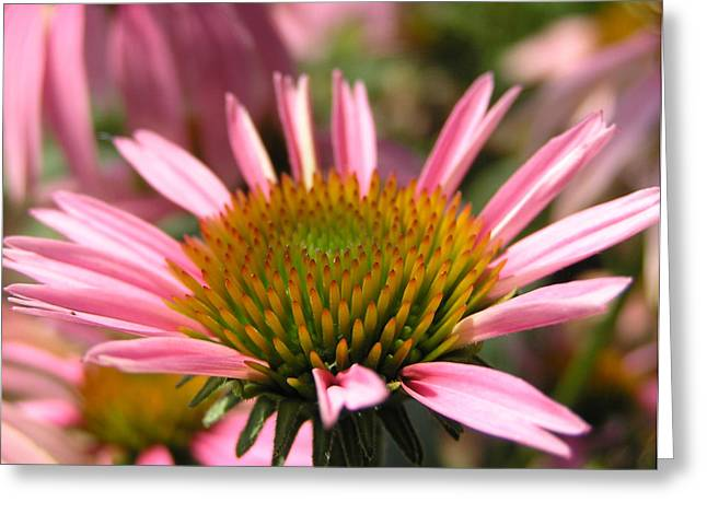 Charleston Greeting Cards - Pink Flower Greeting Card by Dustin K Ryan