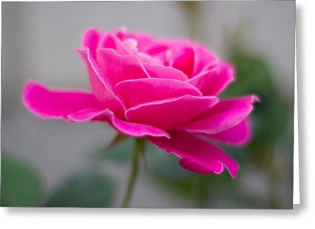 Milos Dacic Greeting Cards - Pink flower Greeting Card by Milos Dacic