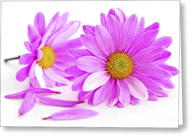 Invitation Greeting Cards - Pink flowers Greeting Card by Elena Elisseeva